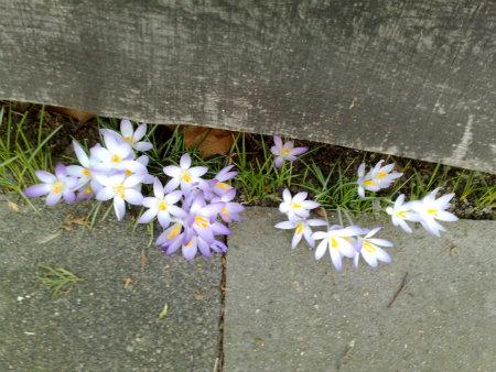 Der Frühling bahnt sich seinen Weg