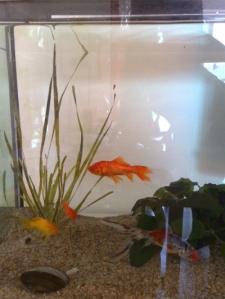 """Der """"Alte"""" (der obere Orange) und seine neue Familie"""